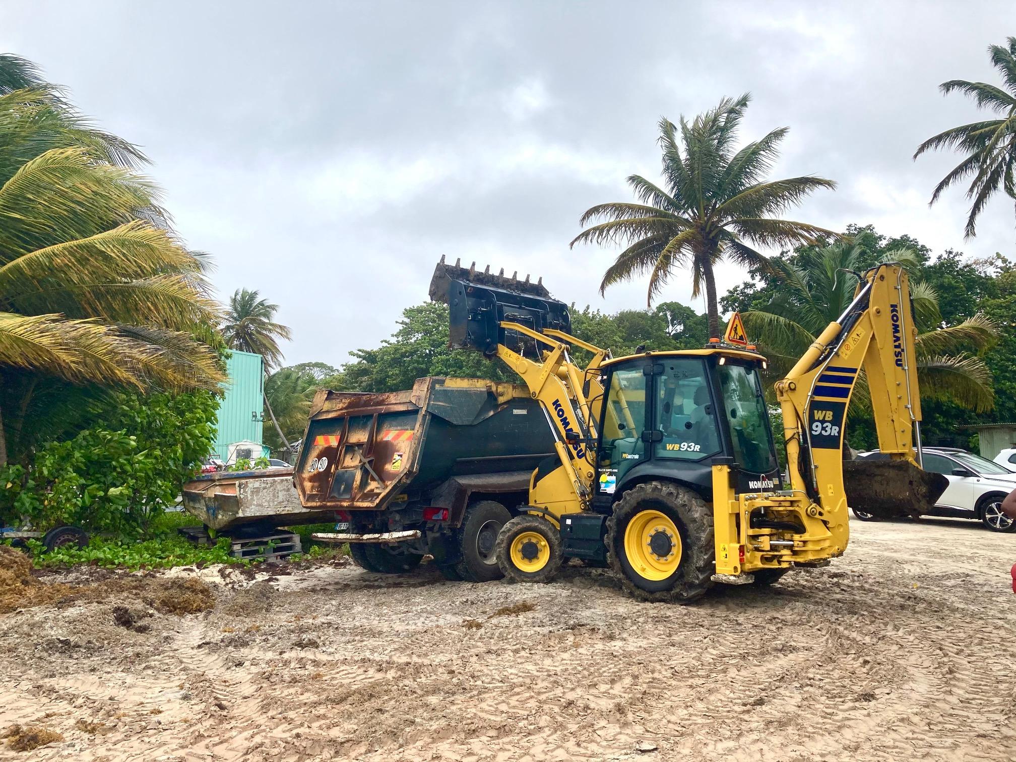Sargasses : la Guadeloupe progresse, mais doit encore mieux faire