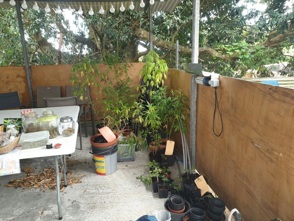 Une plantation de cannabis saisie chez un particulier à Baillif