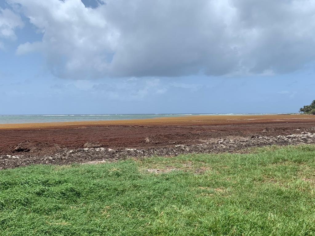 Sargasses : pour des solutions durables en Guadeloupe