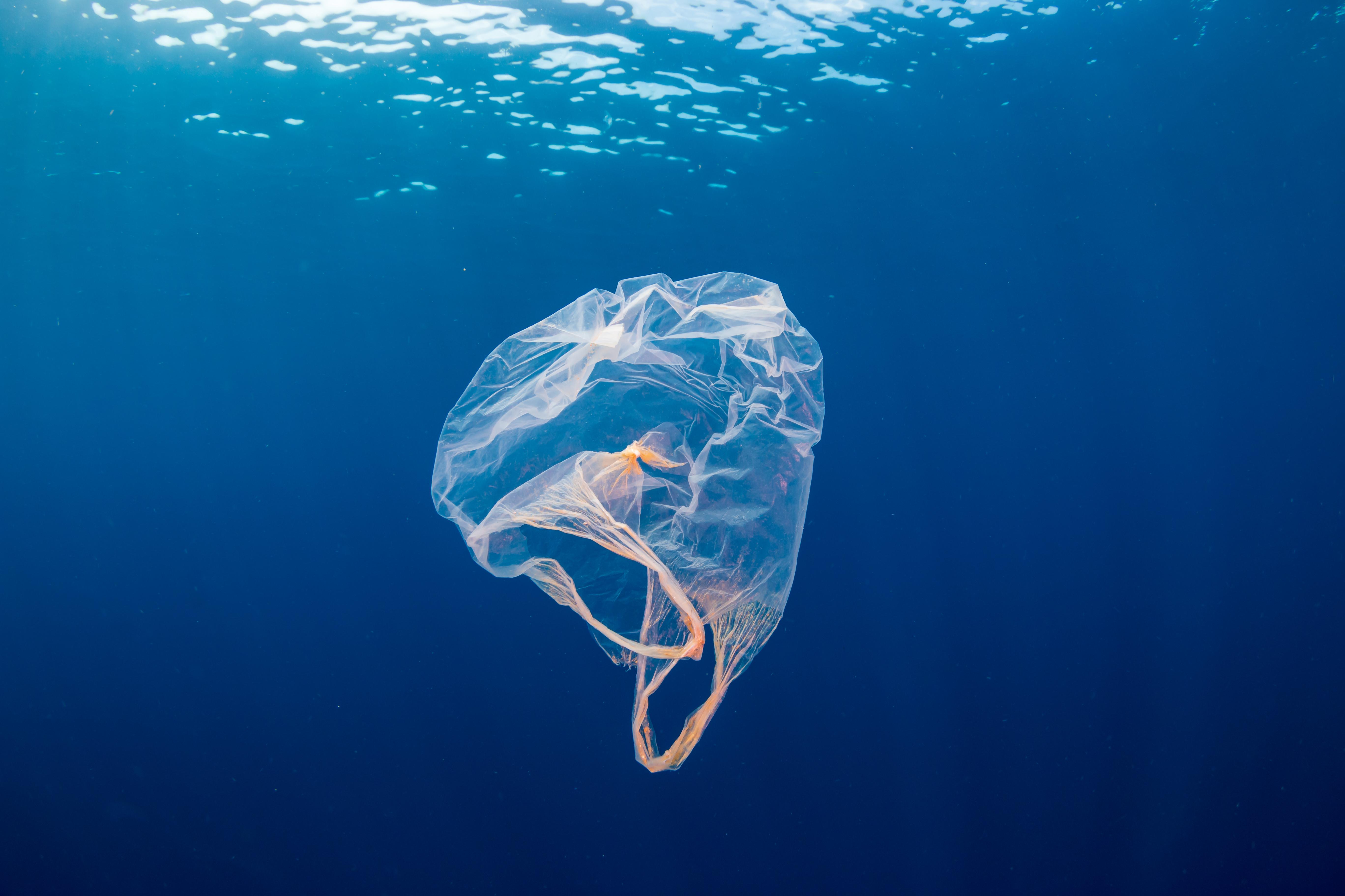 Pollution au plastique : quel est l'état de la mer en Martinique ?