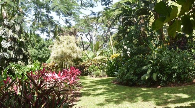 Une Remise En Etat Express Pour Le Jardin Botanique De Deshaies Rci