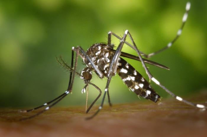 45 cas concernant la dengue et 48 cas cliniquement évocateurs de chikungunya en Guadeloupe