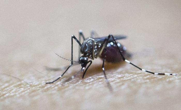 5 cas de dengue en Guadeloupe