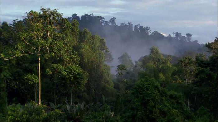 50% du territoire est composé de forêt: l'ONF appelle à sa protection