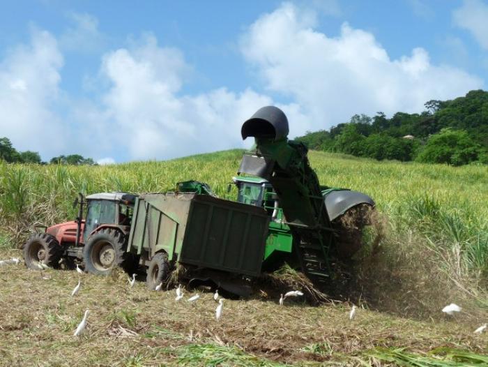 Accident agricole au Moule