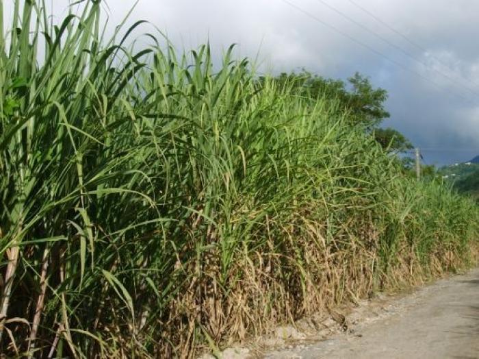 Agriculture : la sécheresse sévit, le ministère de l'Outre-Mer réagit