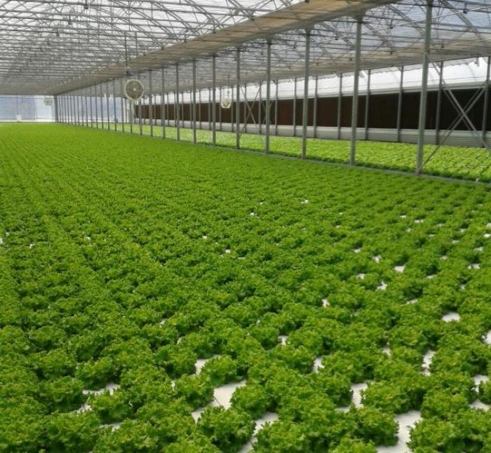 Agriculture : à la découverte de l'hydroponie...