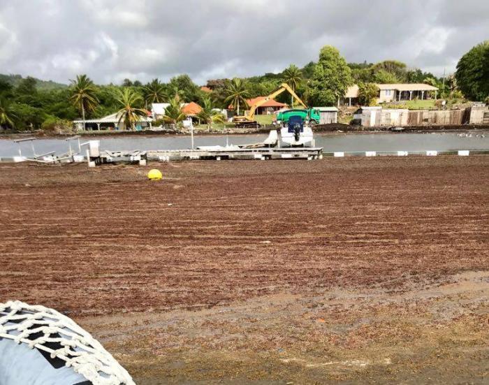 Algues sargasses : les barrages sont-ils efficaces ?