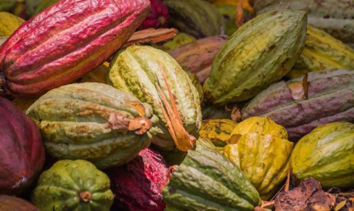 Avis aux gourmands : c'est la journée mondiale du chocolat