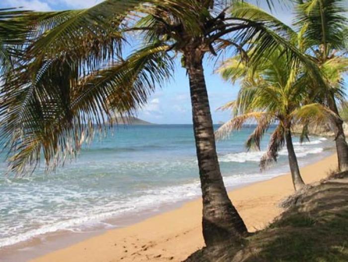 Barbecues sur les plages : attention aux arbres !