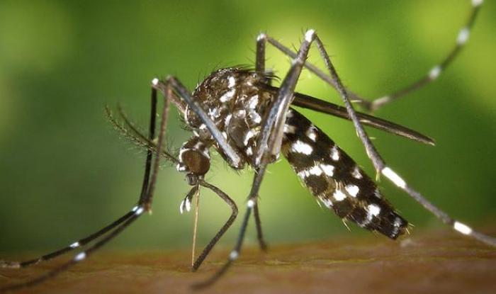 Bientôt un vaccin contre le chikungunya ?