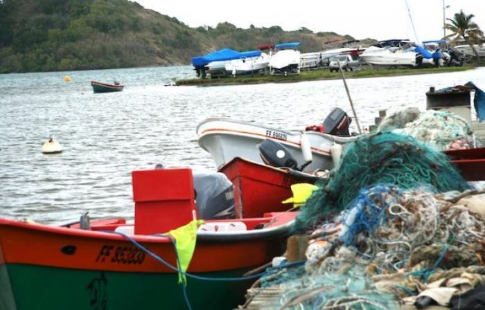 Braconnage d'espèces protégées : le comité des pêches réagit