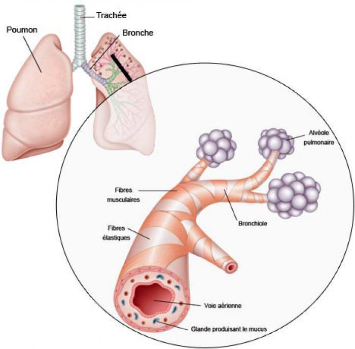 Bronchiolites : l'épidémie est déclarée