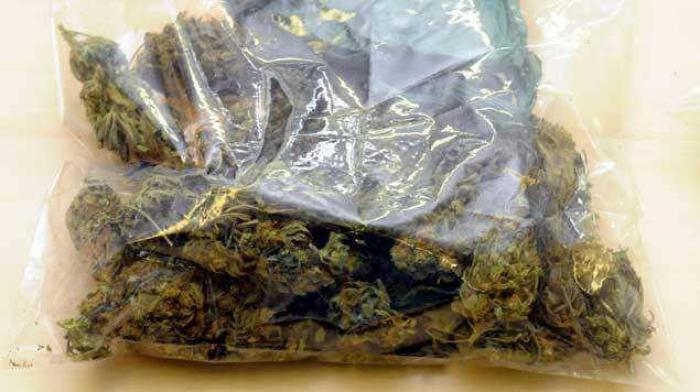 Cannabis : trois trafiquants présumés en comparution immédiate