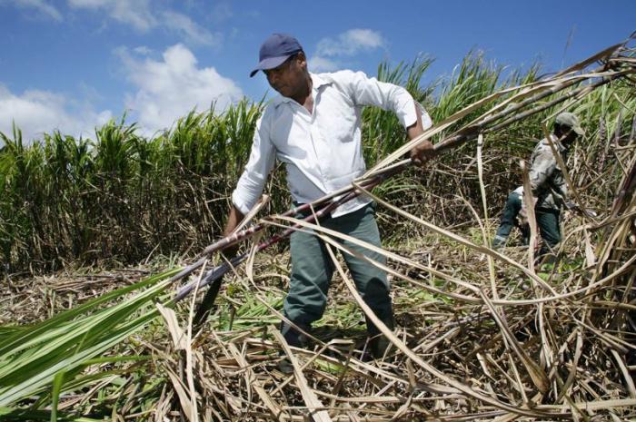 Caraïbes : Cuba importe du sucre français pour éviter la pénurie