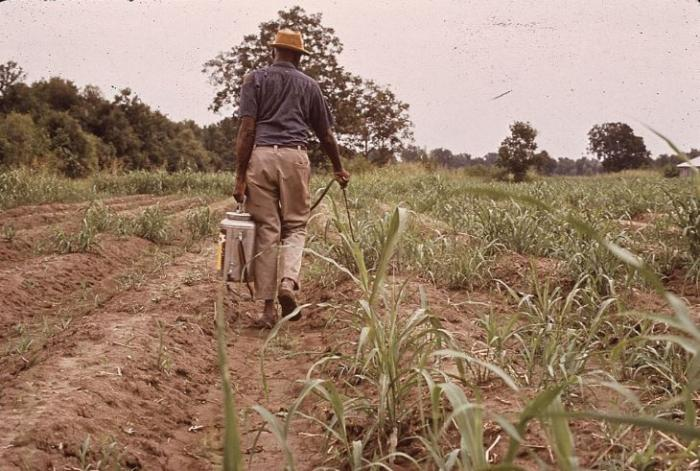 Comment pallier l'interdiction des pesticides de synthèse ?