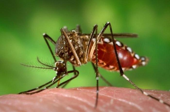 Dengue et Ckikungunya, une situation plutôt calme en Guadeloupe