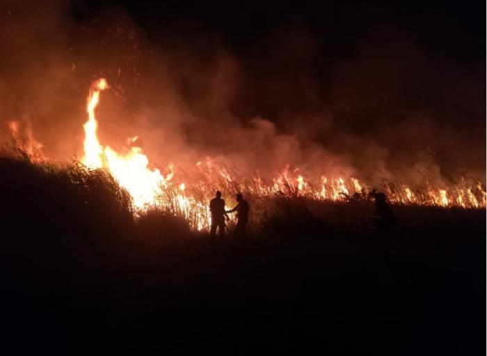 Des hectares de mangrove ravagés par un incendie à Marie-Galante (VIDEO)