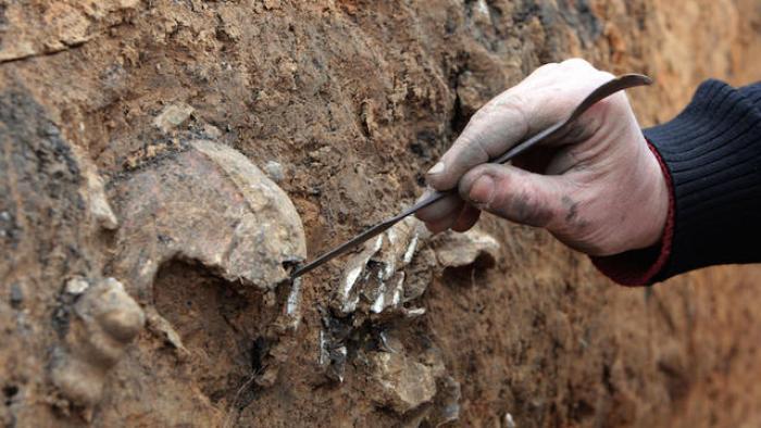 Des ossements découverts à Sainte-Anne