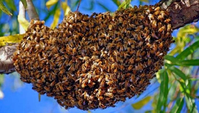 Dillon : un essaim d'abeilles sème la panique !