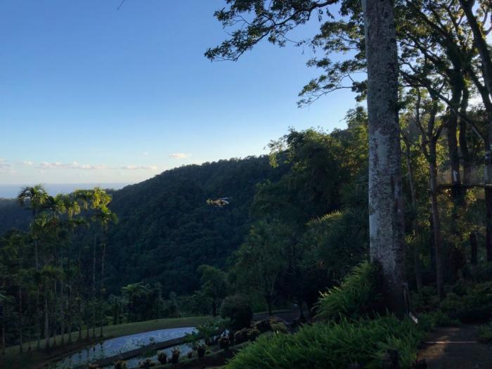 Disparition Jardin de Balata : la touriste retrouvée vivante