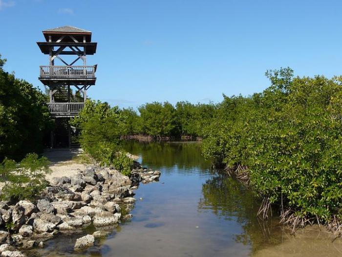 Disparitions en série dans la mangrove de Port-Louis