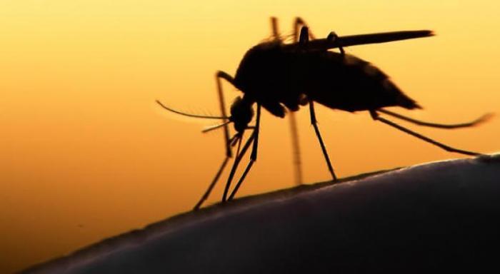 Début de circulation du virus de la dengue en Martinique