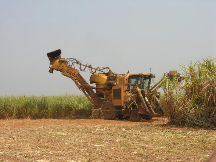 Démission massive du conseil d'administration de la CUMA du bassin cannier nord Basse-Terre