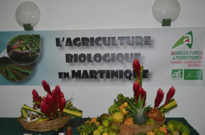 Développement d'une agriculture bio en Martinique