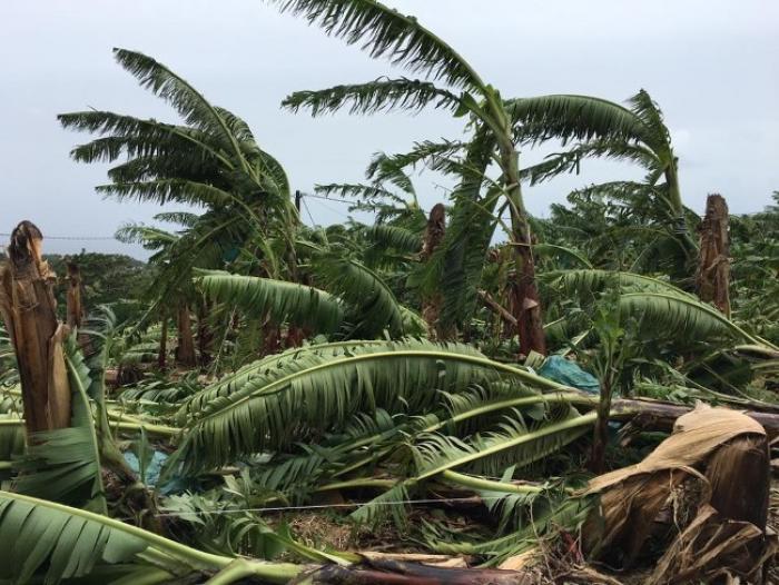 Ericka Bareights annonce l'activation du fonds de secours pour calamité agricole