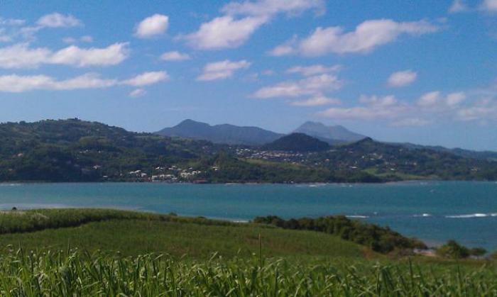 Filière canne : un plan, un pacte et un objectif ambitieux réaffirmé par la Région et les professionnels martiniquais