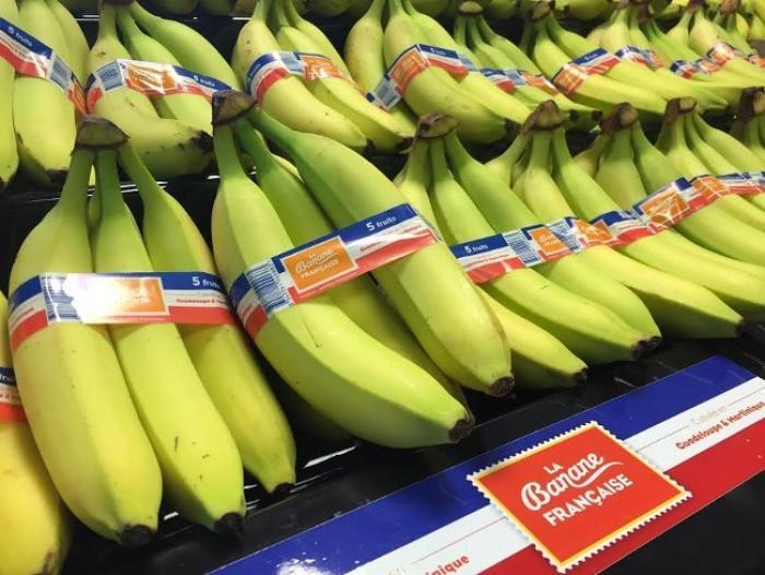 """Hors de question d'abandonner le projet """"Cap sur 100 000 tonnes de bananes d'ici 2020"""""""