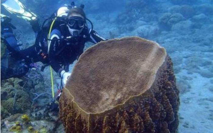 L'expédition Madibenthos a constaté la dégradation de nos milieux aquatiques côtiers