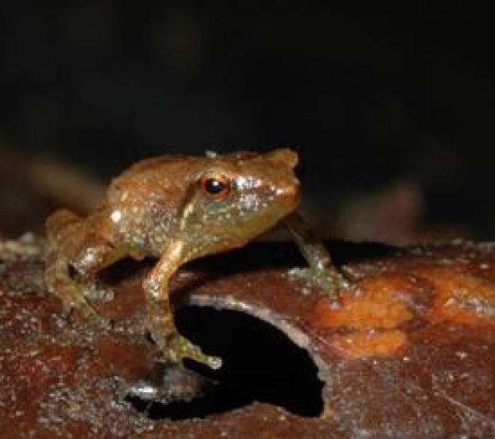 L'incroyable voyage de Moïsette la petite grenouille de Guadeloupe
