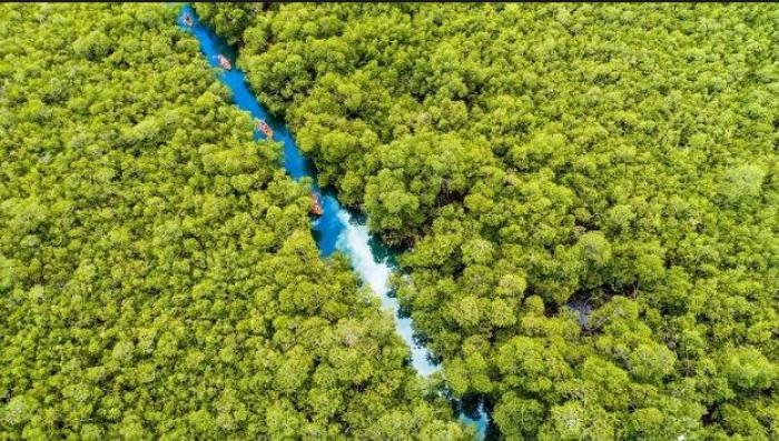 La baie de Génipa pourrait devenir la quatrième réserve naturelle de Martinique