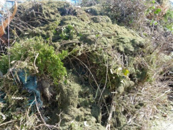 La collecte de déchets verts stoppée à Saint-François et Sainte-Anne