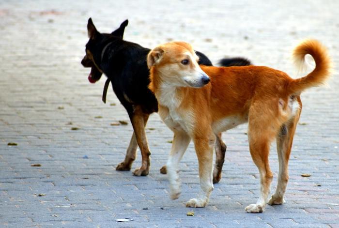 La DAAF lance une campagne pour lutter contre les chiens errants