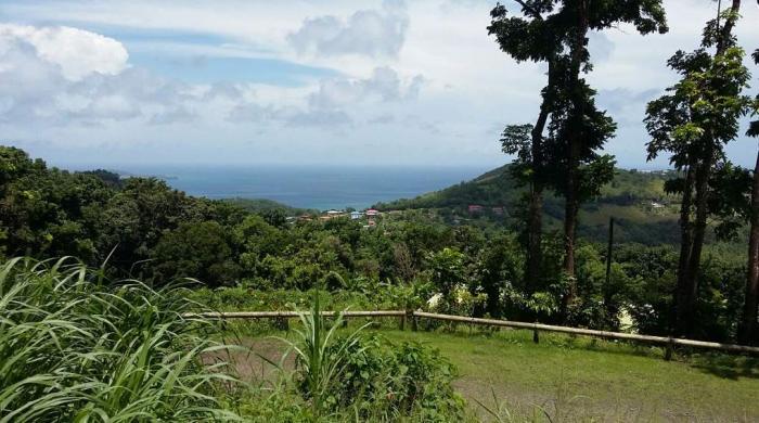 """La forêt """"Montravail"""" le poumon vert du sud de la Martinique"""