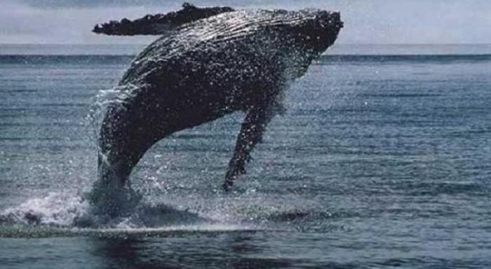 La Karujet repoussée pour éviter les baleines
