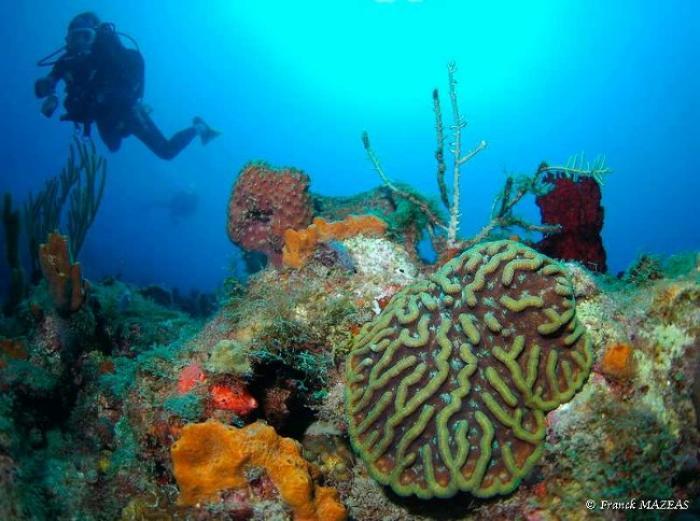 La Martinique peut-elle remporter la Palme de l'IFRECOR ?