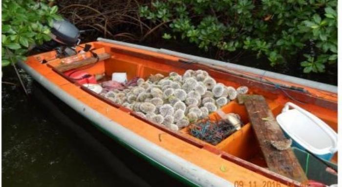 La pêche aux oursins blancs ouvre du 15 au 30 octobre.