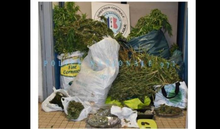 La police découvre 325 pieds de cannabis dans une maison à Balata