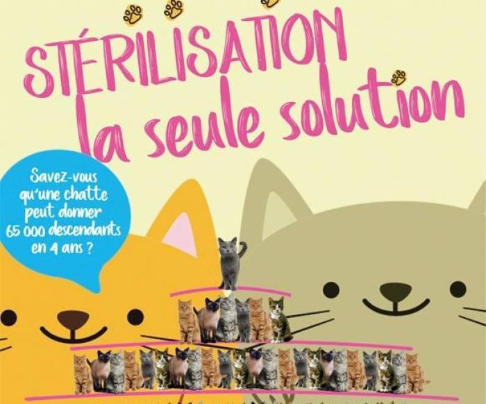 La SPA organise une grande campagne de stérilisation et d'identification de chattes