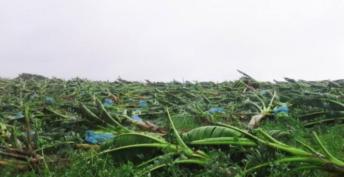 La vidéo aérienne qui montre les dégâts dans les bananeraies