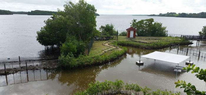 Lamantins en Guadeloupe : quel avenir pour le projet ?