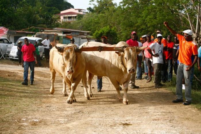 Le comité de bœuf tirant enregistre un excédent de 78 000 euros