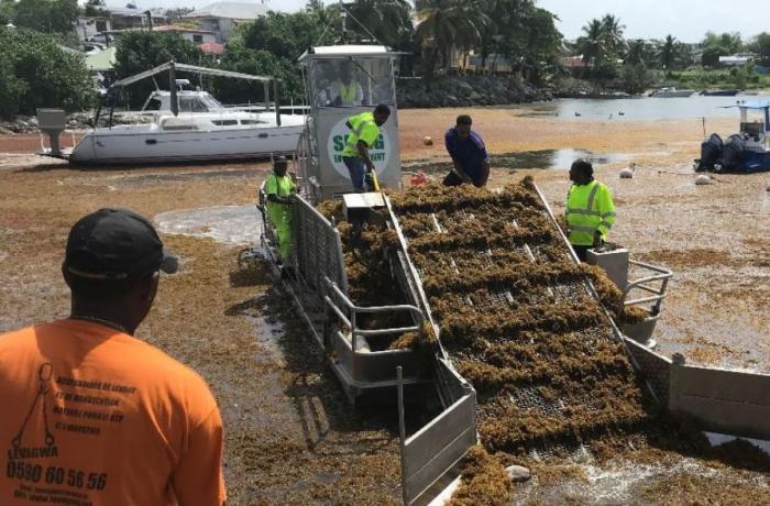 Le Département mobilisé pour l'enlèvement des sargasses au Gosier