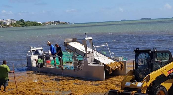 Le littoral Atlantique envahi par les sargasses