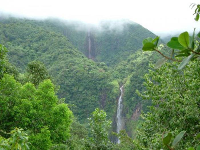 Le Parc national de la Guadeloupe : un abri pour la survie de la biodiversité