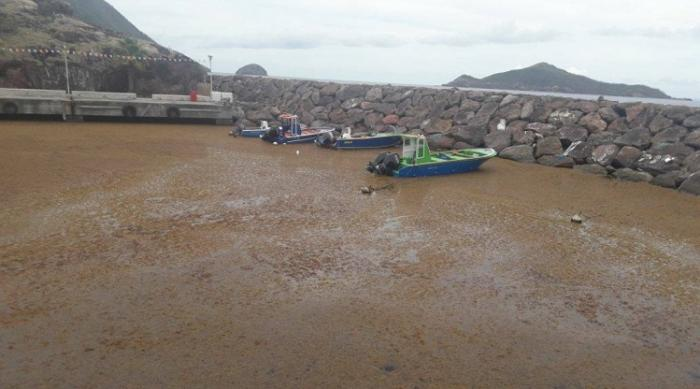 Le port de Terre-de-Bas envahi par les sargasses
